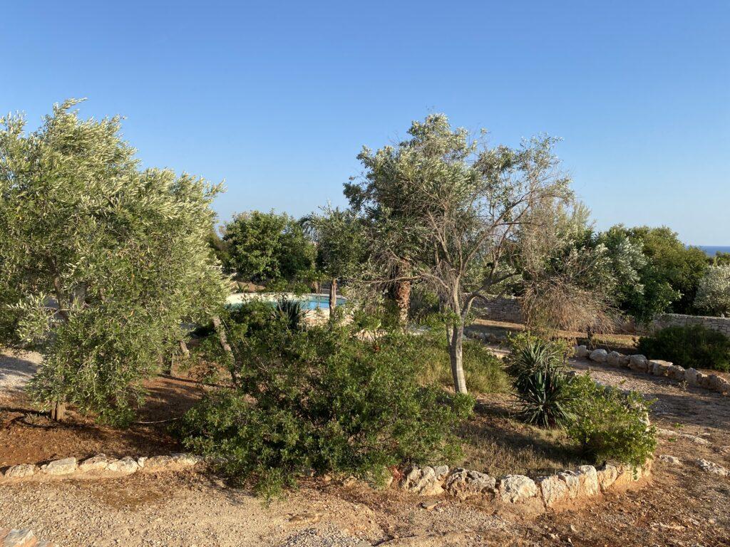 Giardino esterno di villa con piscina a Torre Pali per le tue vacanze in Salento